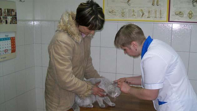 ветеринарные клиники новокузнецк